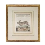 Le Riche Rabbit Engraving
