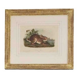 Audubon Rabbit Engraving